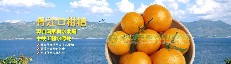 丹江口柑橘