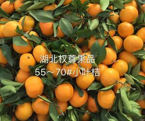 求购武当蜜橘,供应武当蜜橘