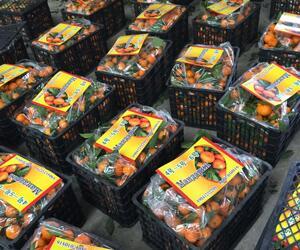 权尊果品发出的柑橘包装