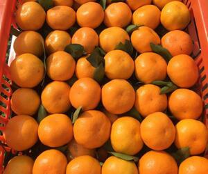 习家店镇橘子|凉水河镇柑橘|石鼓镇柑桔|江北蜜橘